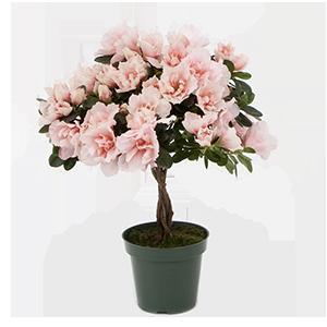 4.5inch-tree