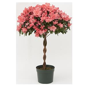7.5_Tree